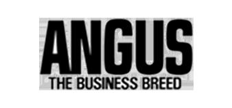 bg-logo-angus-update-2